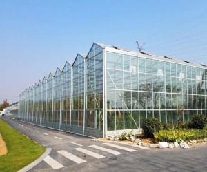 山东温室大棚建设