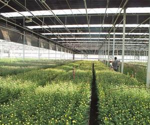 山东花卉温室工程